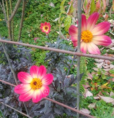 flower_jail