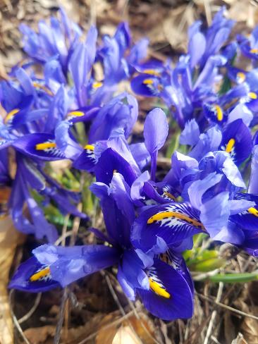 tiny_iris