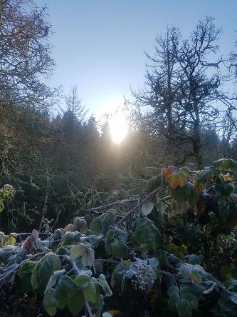 sunrise_frost