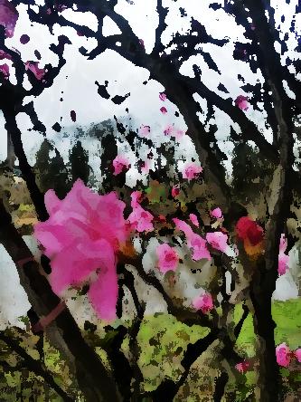 pink_azalea_marker