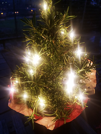 rosemary_lights